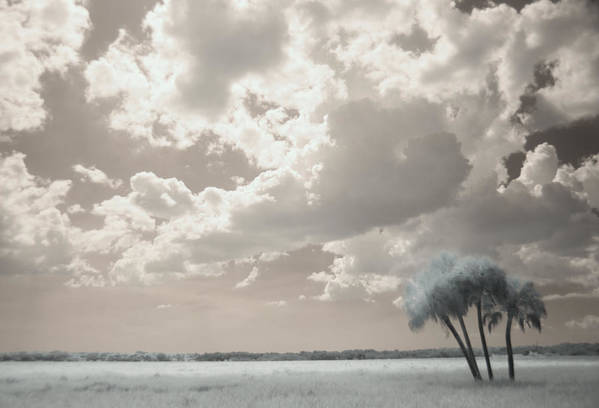 Trees Art Print featuring the photograph Four Trees by Gary Bartoloni