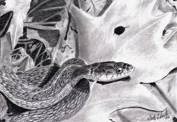 Animals Art Print featuring the drawing Garter Snake by Wade Clark