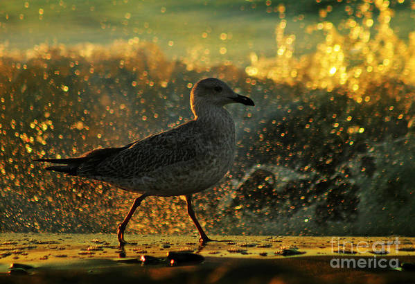 Seagull Art Print featuring the photograph Have A Walk By Th Sea by Angel Ciesniarska