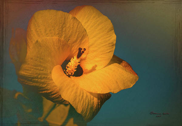 Hibiscus Art Print featuring the photograph Hibiscus by Marvin Spates