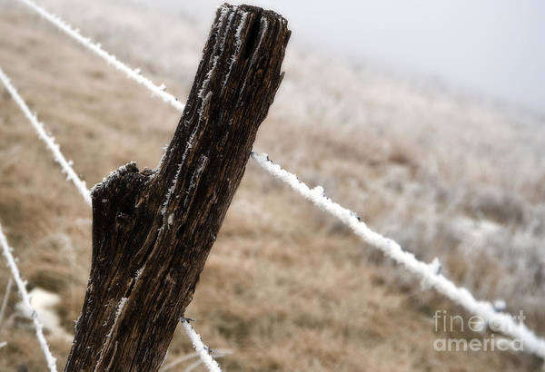 Kansas Art Print featuring the photograph Hoarfrost And Fence by Fred Lassmann