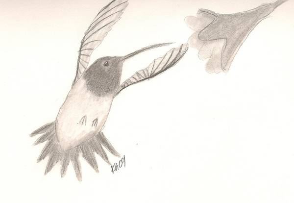 Hummingbird Art Print featuring the drawing Hummingbird by Kristen Hurley