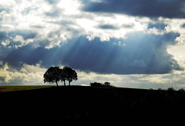 Trees Art Print featuring the photograph Light Rays by Margaret Hood