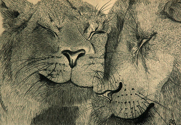 African Anger Angry Animal Anticipating Anticipation Attentive Blijdorp Brown Carnivore Cat Cats Couple Duo Family Fight Lion Lioness Lions Love Pair Pride Sibling Siblings Wild Wiskers Zoo Art Print featuring the drawing Lions In Love by Ramneek Narang