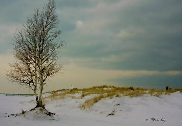 Lone Tree Art Print featuring the photograph Lone Tree-horizontal by Marti Buckely