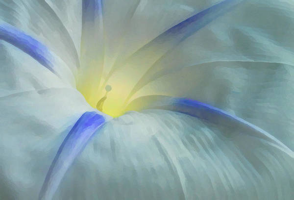 Morning Glory Art Print featuring the photograph Morning Glory by Gene Sizemore