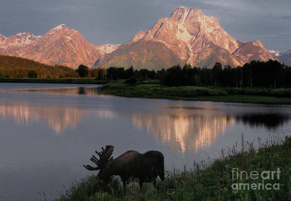 Grand Teton Art Print featuring the photograph Morning Tranquility by Sandra Bronstein