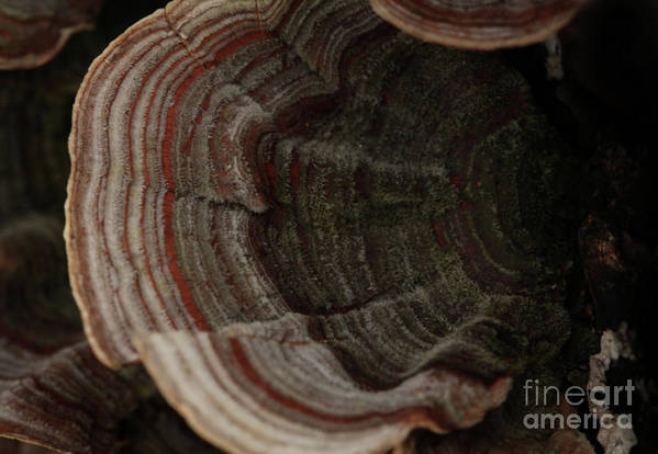Mushroom Photography Art Print featuring the photograph Mushroom Shells by Kim Henderson