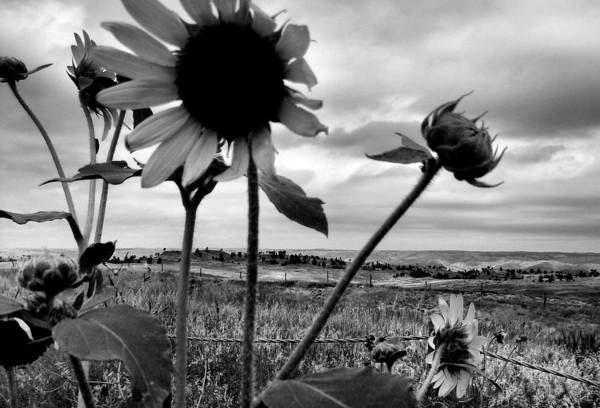 Black And White Art Print featuring the photograph Nebraska Sky by Tingy Wende