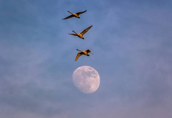 Oregon Art Print featuring the photograph Over The Moon by Marc Crumpler
