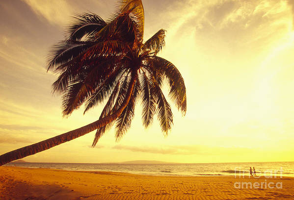 66-csm0125 Art Print featuring the photograph Palm Over The Beach by Ron Dahlquist - Printscapes