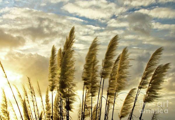 Nature Art Print featuring the photograph Pampas Grass by Julia Hiebaum