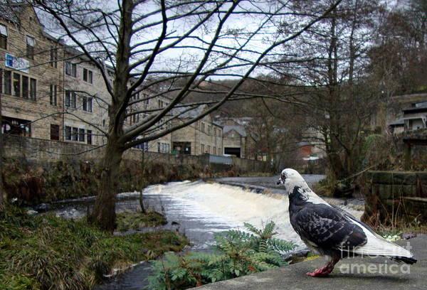 Pigeon Art Print featuring the photograph Pigeon Watch by Jacqui Kilcoyne