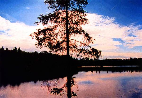Landscape Art Print featuring the photograph Pine Tree By Peck Lake 5 by Lyle Crump