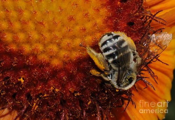 Pollen Art Print featuring the photograph Pollen by Patrick Short