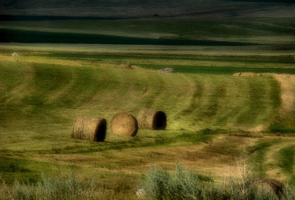 Hay Art Print featuring the photograph Prairie Grace by Tingy Wende