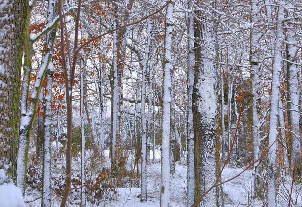 Fine Art Art Print featuring the photograph Season's First Snow by Gerlinde Keating - Galleria GK Keating Associates Inc