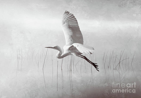 White Egret Art Print featuring the photograph Snowy Egret Morning Bw by Laura D Young