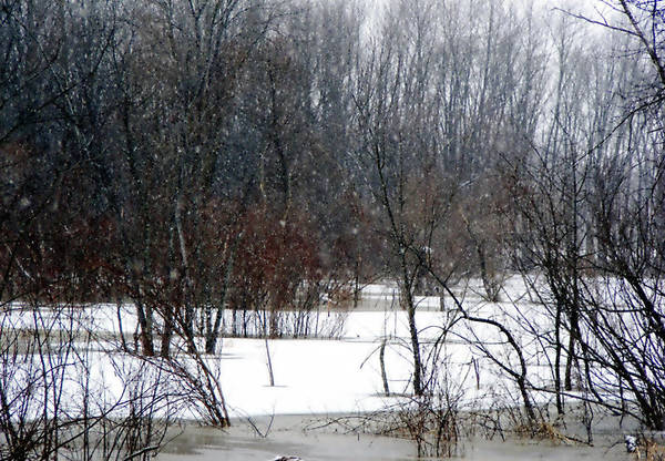 Nature Art Print featuring the photograph Snowy River by Cindy Yeakel