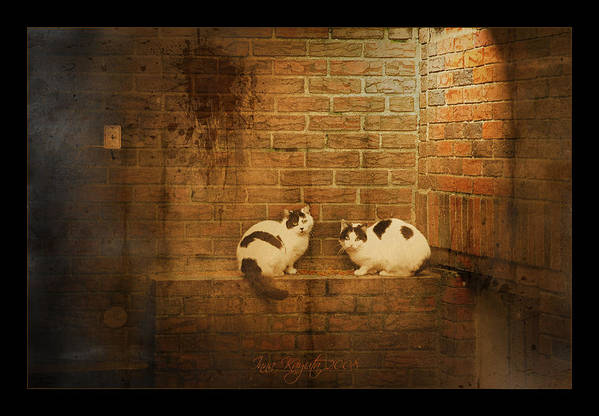 Cats Art Print featuring the photograph Spotlight by Inesa Kayuta