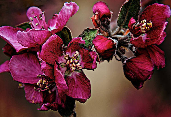 Spring Art Print featuring the digital art Spring by Charles Muhle