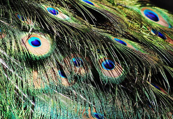 Nature Art Print featuring the photograph The Eyes Have It by Amy Zwick