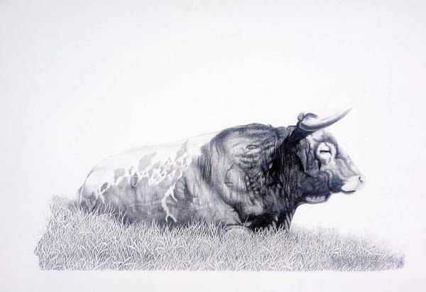 Longhorn Art Print featuring the drawing The Herdmaster by Howard Dubois