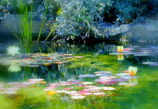 Lily Pond Art Print featuring the photograph The Lily Pond I by Lynn Andrews