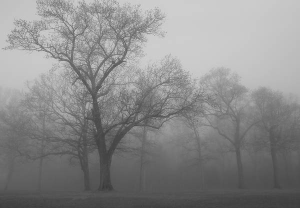 Tree Art Print featuring the photograph Tree In Black And White by James Jones