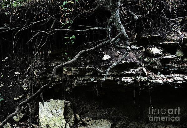 Landscape Art Print featuring the photograph Twisted by Fred Lassmann