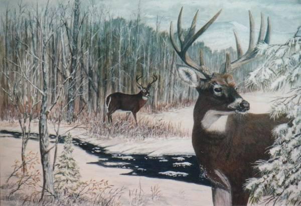 Deer; Snow; Creek Art Print featuring the painting Whitetail Deer by Ben Kiger