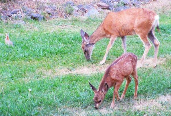 Deer Art Print featuring the photograph With Mother by Jeff Birr
