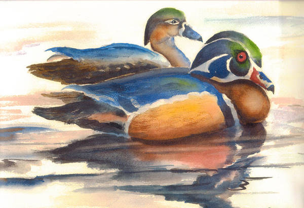 Ducks Art Print featuring the painting Wood Ducks by Ruth Bevan