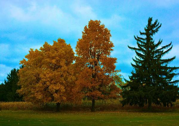 Nature Art Print featuring the photograph Fall Colors by Richard Jenkins