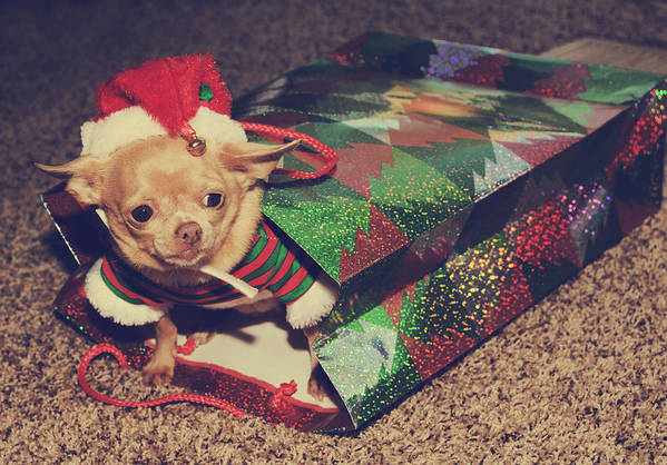 Dog Art Print featuring the photograph A Sweet Christmas Surprise by Laurie Search