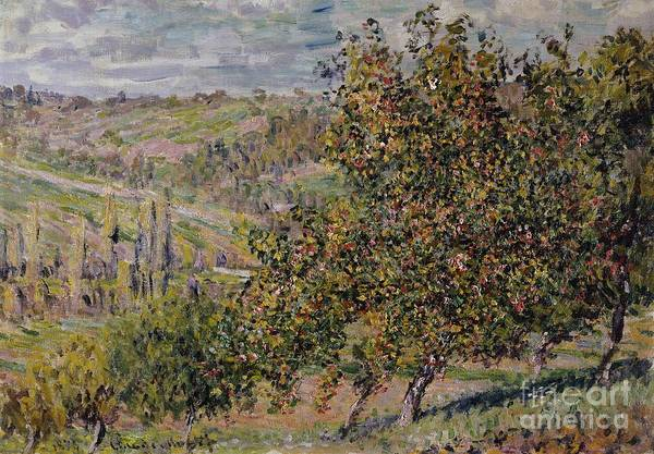 Apple Blossom; Blossom; Blossoming; Spring; Seasons; Springtime; Landscape; Rural; Countryside; Tree; Trees; Impressionist Art Print featuring the painting Apple Blossom by Claude Monet