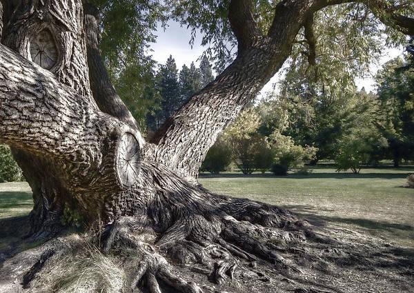 Tree Art Print featuring the photograph Arboretum Tree by Daniel Hagerman