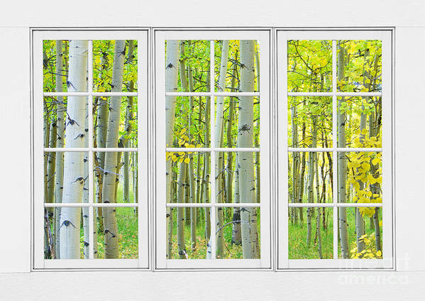 Aspens Art Print featuring the photograph Aspen Tree Forest Autumn Time White Window View by James BO Insogna