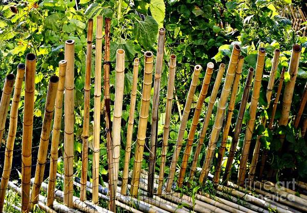 Bamboo Art Print featuring the photograph Bamboo Fencing by Lilliana Mendez