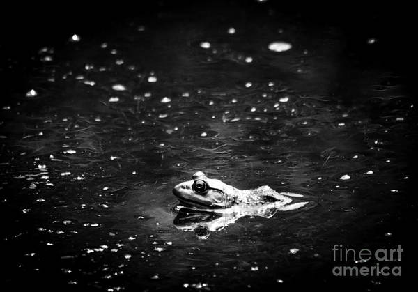 Frog Art Print featuring the photograph Being Green In Black And White by Cheryl Baxter