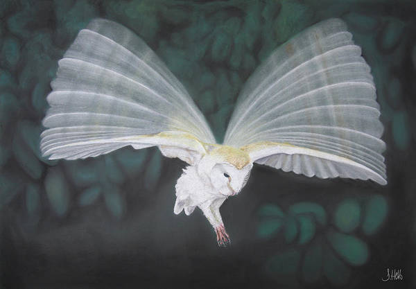 Barn Owl Art Print featuring the drawing Blurred Wings by John Hebb