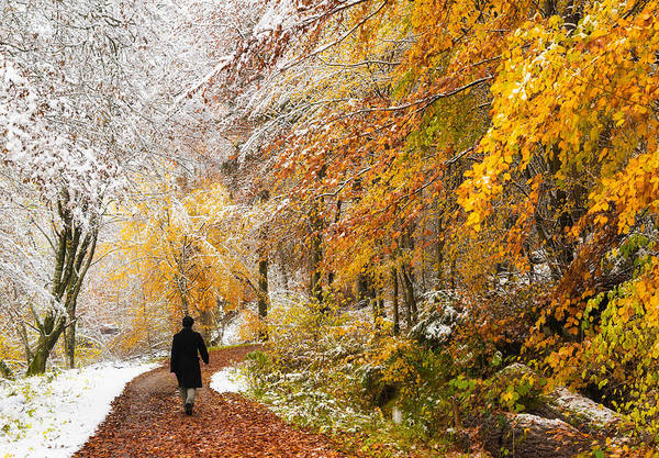 Fall Art Print featuring the photograph Fall Or Winter - Autumn Colors And Snow In The Forest by Matthias Hauser