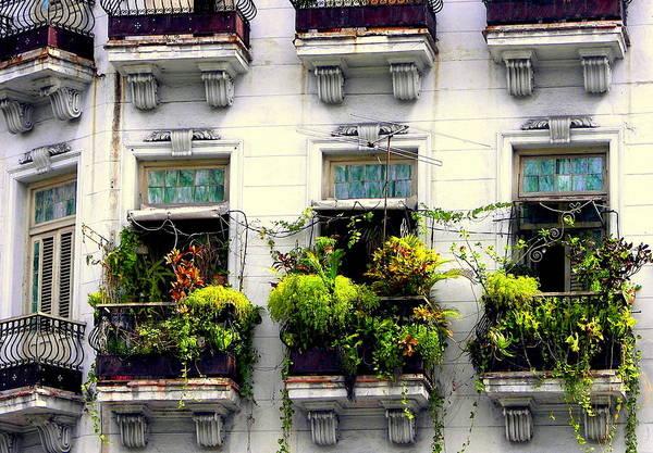 Cuban Architecture Art Print featuring the photograph Havana Windows by Karen Wiles