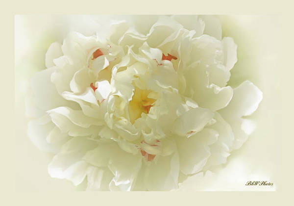 Peony Art Print featuring the photograph Heavenly Peony With Frame by Bonnie Willis