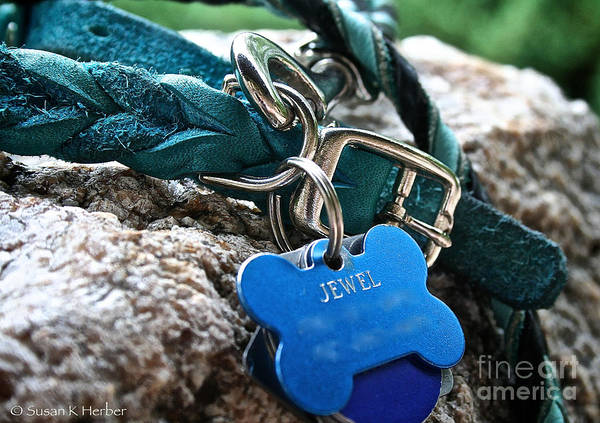Dog Art Print featuring the photograph Jewel's Jewelry by Susan Herber