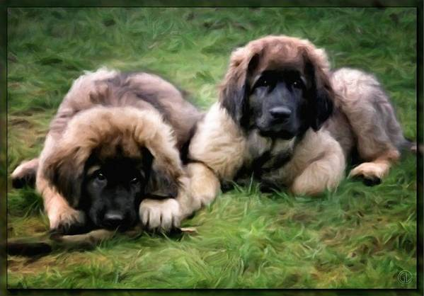 Dog Art Print featuring the digital art Leonberger Puppies by Gun Legler
