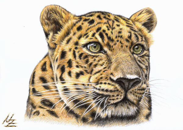 Leopard Art Print featuring the drawing Leopard by Nicole Zeug