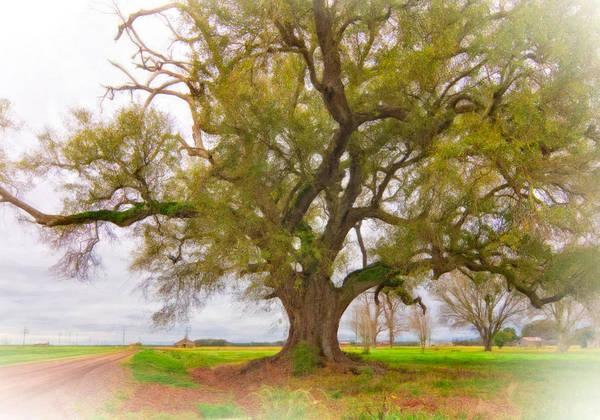 Delta Art Print featuring the photograph Louisiana Dreamin' by Steve Harrington