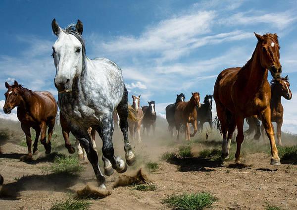 Horse Art Print featuring the photograph On The Run by Bob Keller