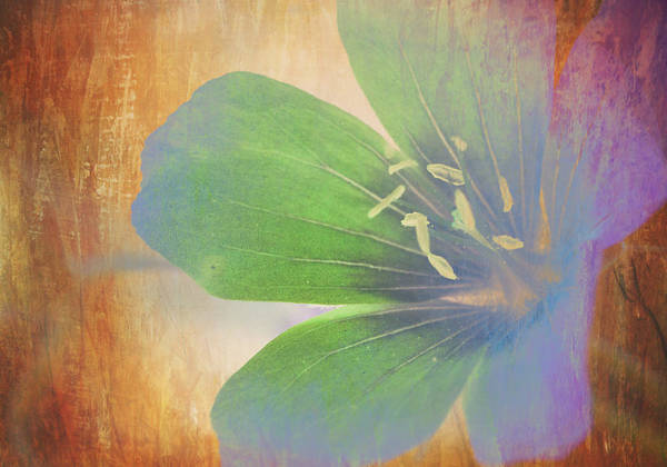 Images By Jeff Folger Art Print featuring the photograph Petals Of Color by Jeff Folger